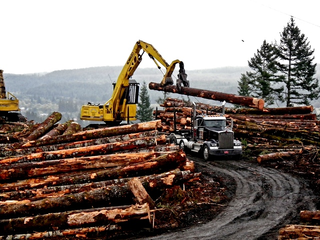 ERP solutions for the Timber Industry